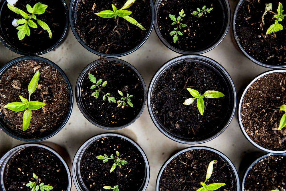 benefits of gardening at home pots of plants